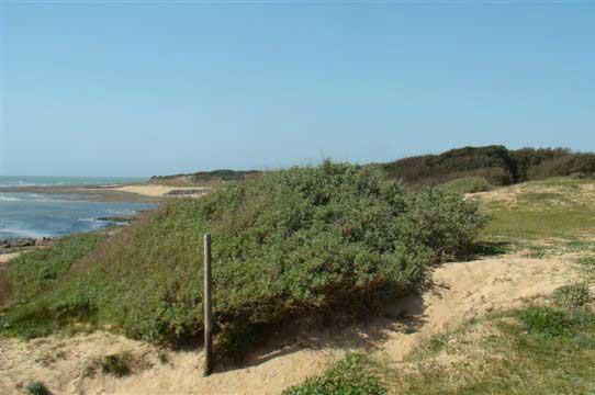 Camping municipal la Fauche-Prère, Oléron, dune et plage
