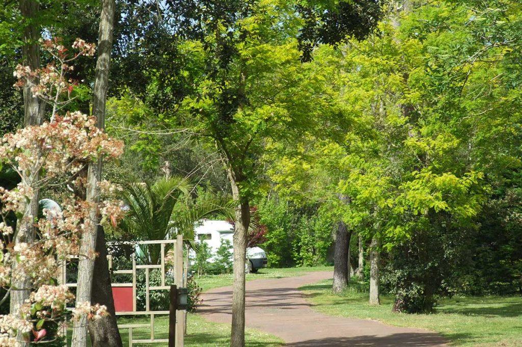 Camping le Sous Bois, île d'Oléron, un parc arboré