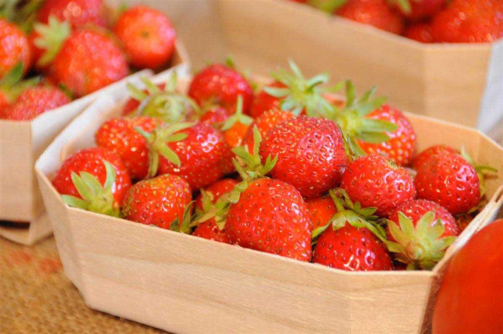 Le Jardin de la Josière, île d'Oléron, fraises