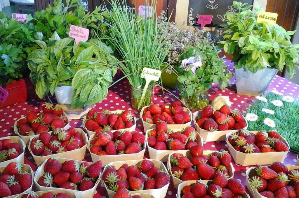 Herbes aromatiques, fraises, île d'Oléron