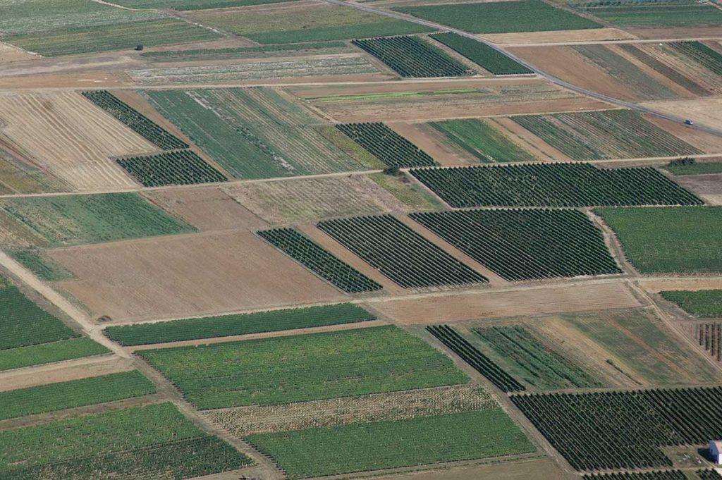 Agriculture île d'Oléron, champs et vignes