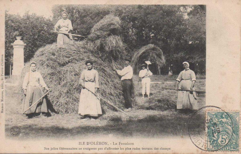 Histoire de l'agriculture île d'Oléron, fenaison