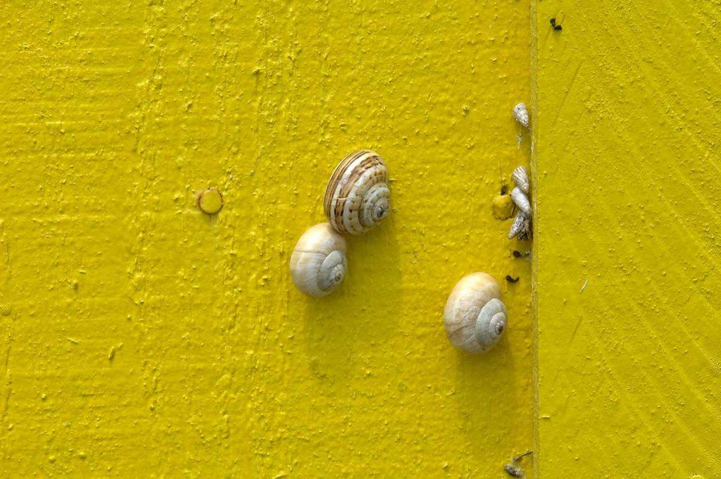 Chenal de la Baudissière, les cabanes ostréicoles