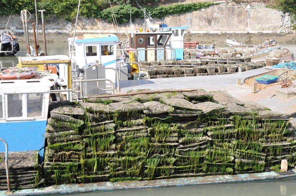Ostréiculture Marennes-Oléron, huîtres élevées en poche