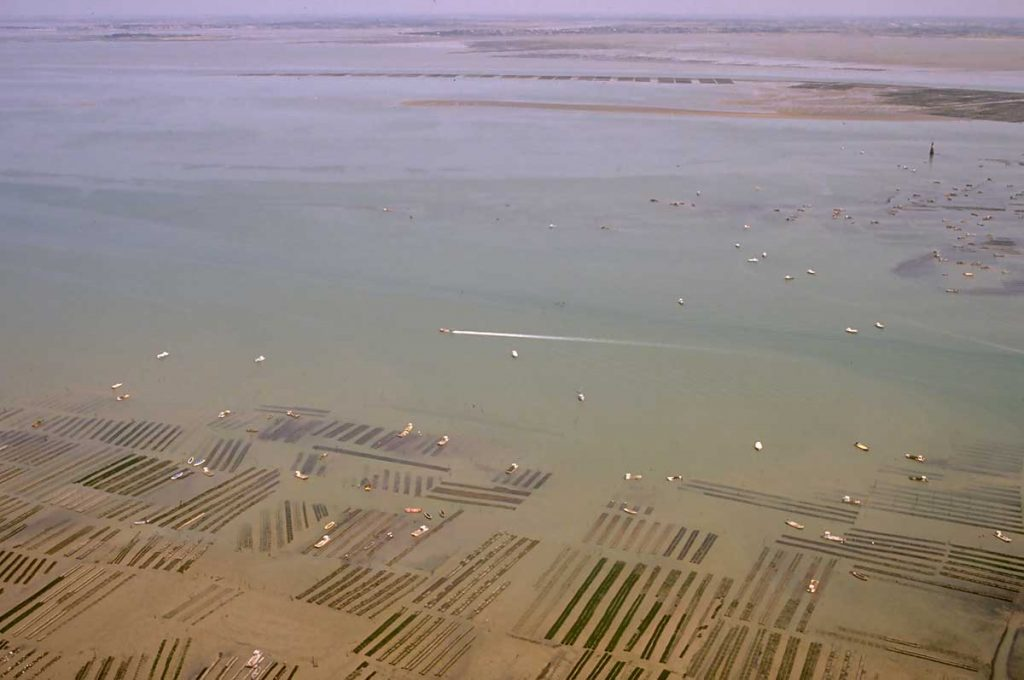 Ostréiculture Marennes-Oléron, travail dans les parcs en mer