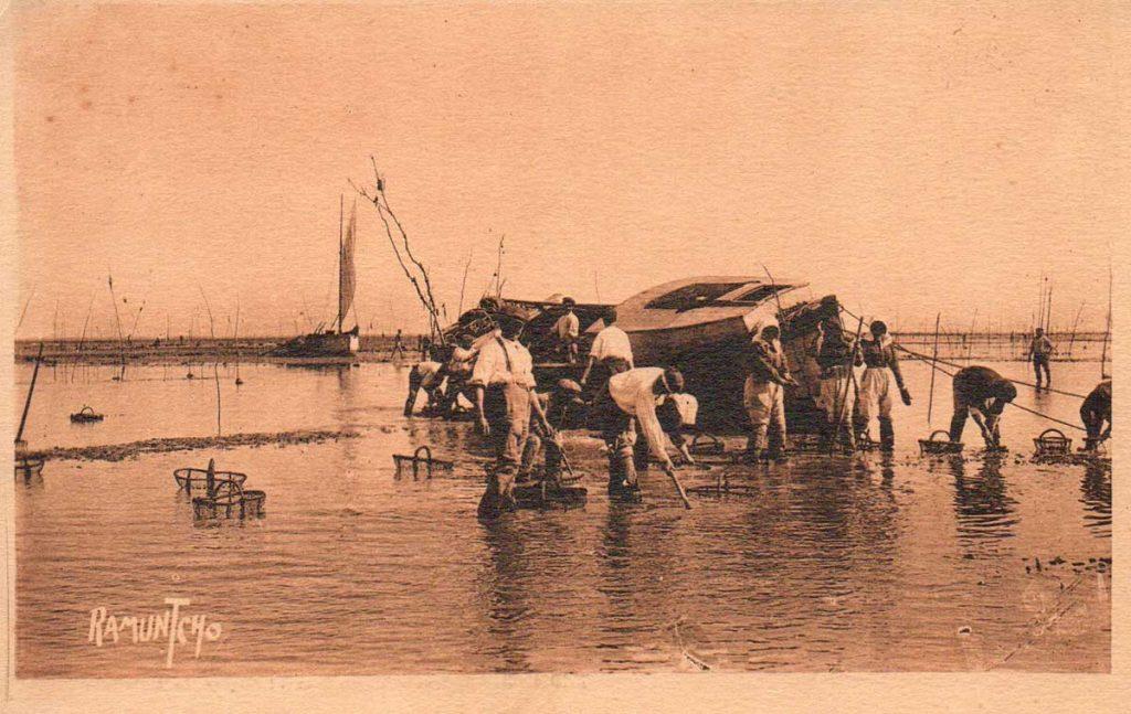 Pêche des huîtres devant Oléron