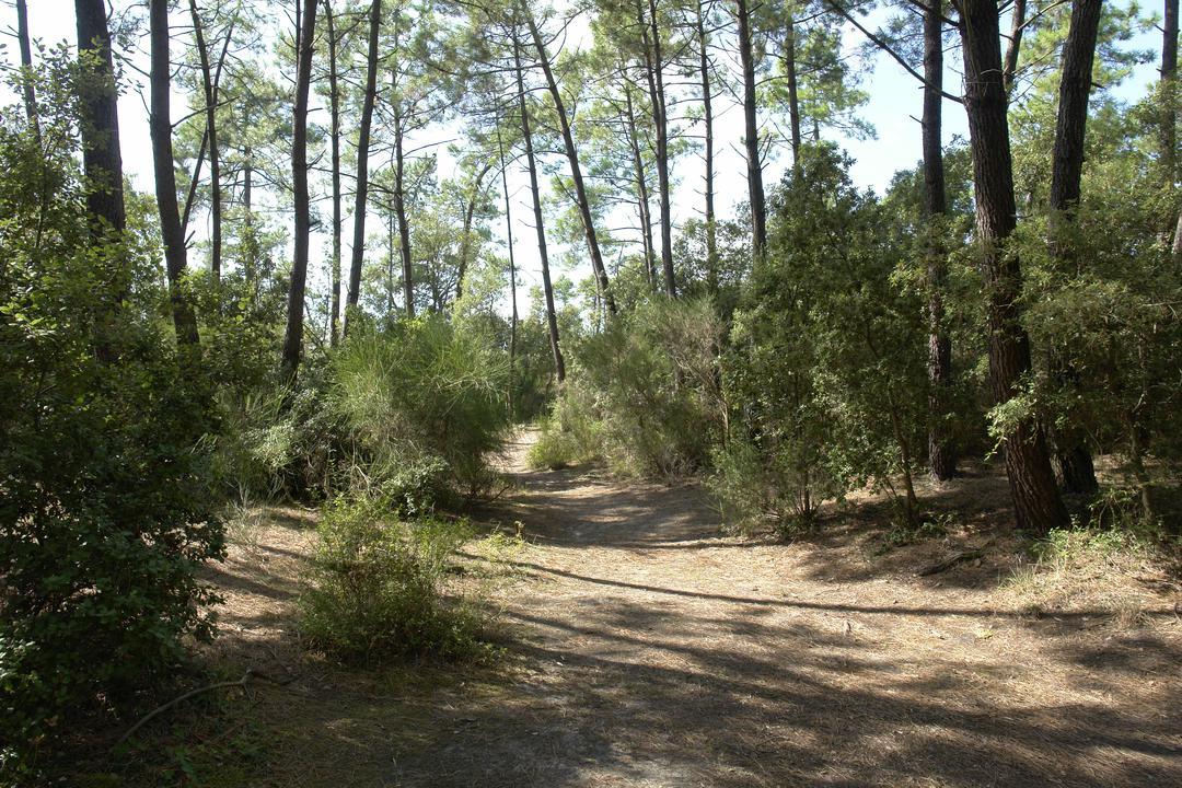 Forêt domaniale des Saumonards