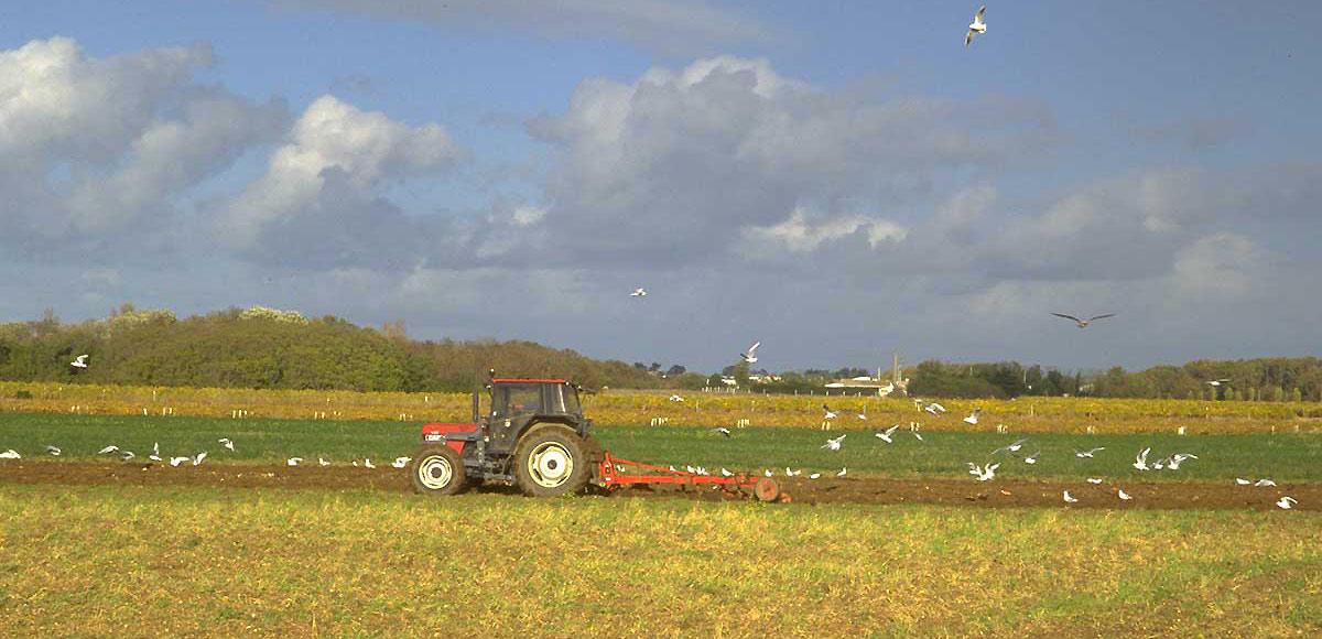 Agriculture de l'île d'Oléron