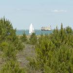 Le trésor des sables à Boyardville, île d'Oléron