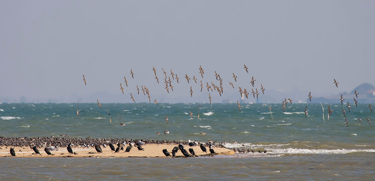 La faune de l'île d'Oléron