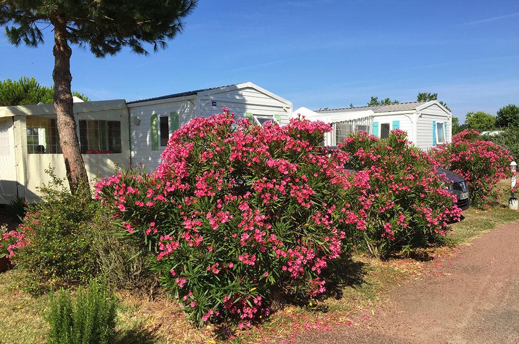 Camping la Boulinière, île d'Oléron, allée fleurie