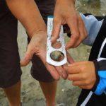 Apprendre la pêche à pied. Ile d'Oléron