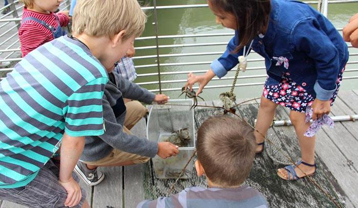 Course de crabes, cité de l'huître Marennes-Oléron