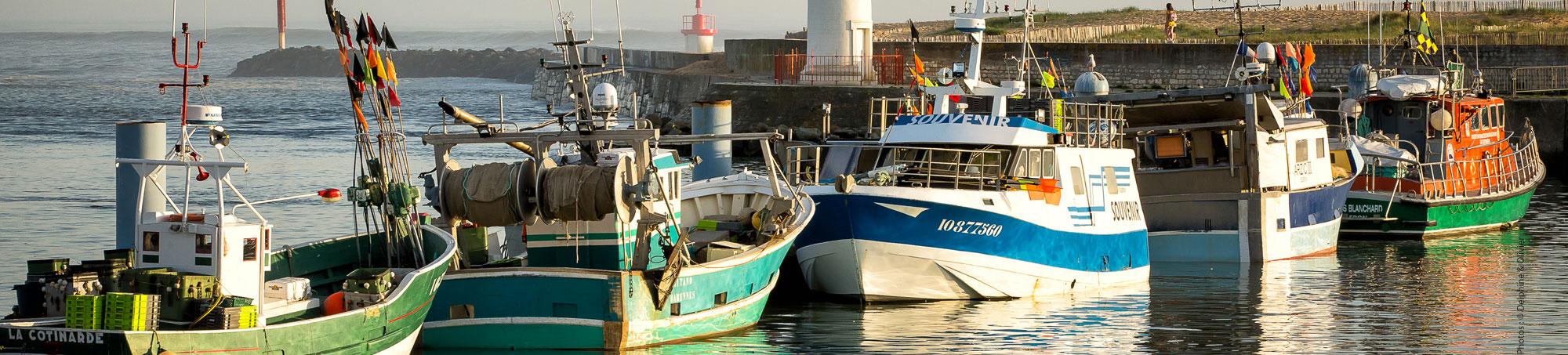 Les Pêcheries de la Cotinière, le port, île d'Oléron