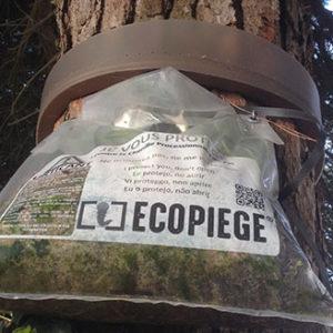 Lutte contre la chenille processionnaire du pin, île d'Oléron