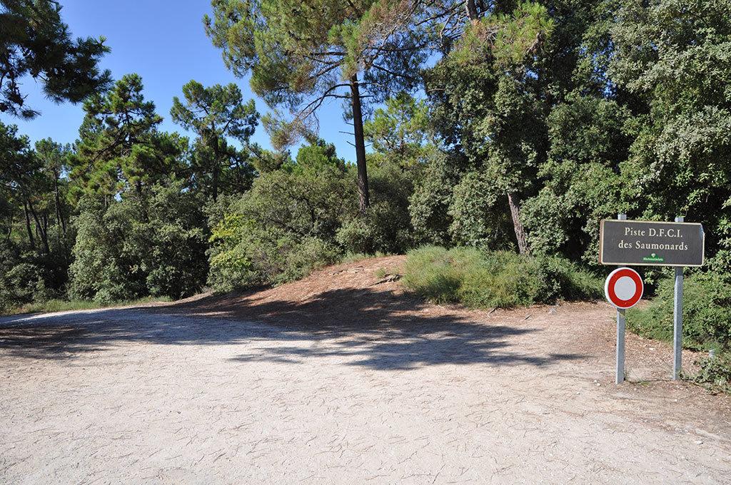 Forêt des Saumonards, Boyardville, Oléron