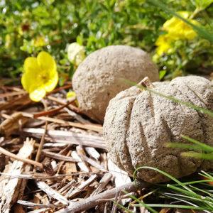 Maison Eco-Paysanne : Bombes à graines. Oléron