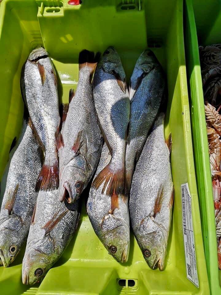 Vente directe de poissons sur Oléron : maigre