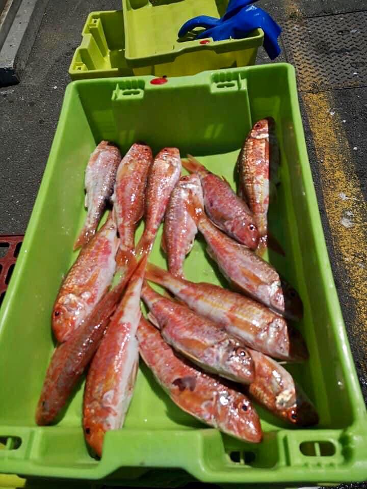 Vente directe de poissons sur Oléron : rougets