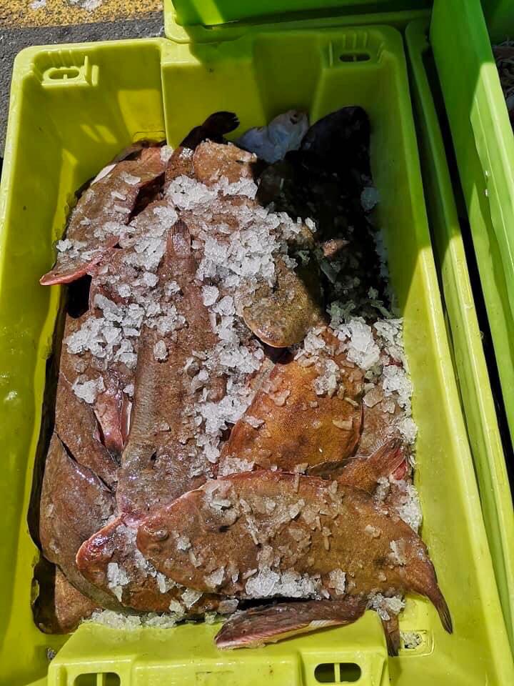 Vente directe de poissons sur Oléron : soles