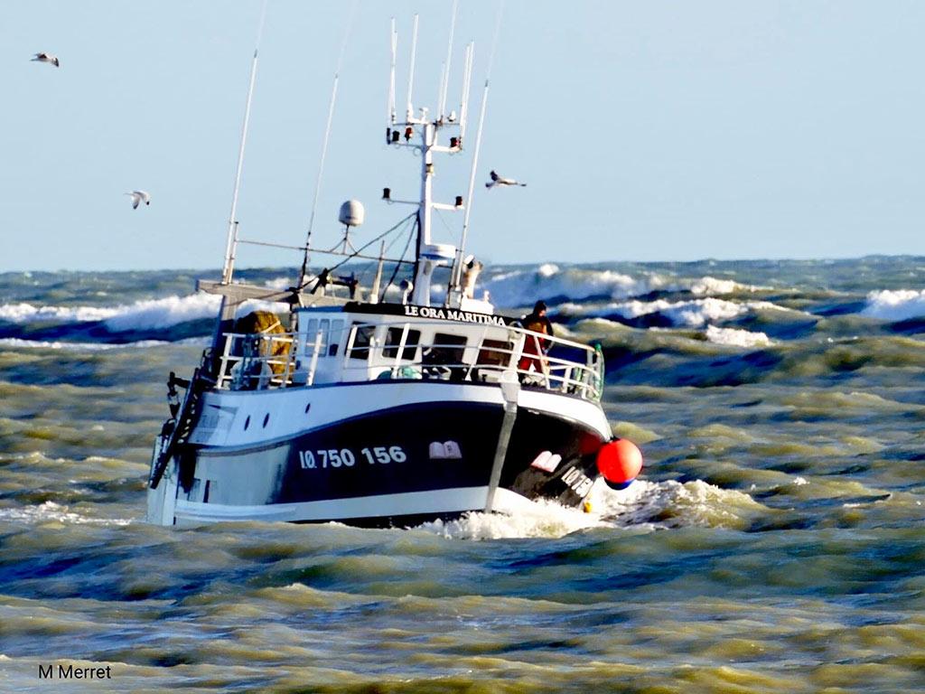 Vente de poissons direct - Oléron - Ora Maritima