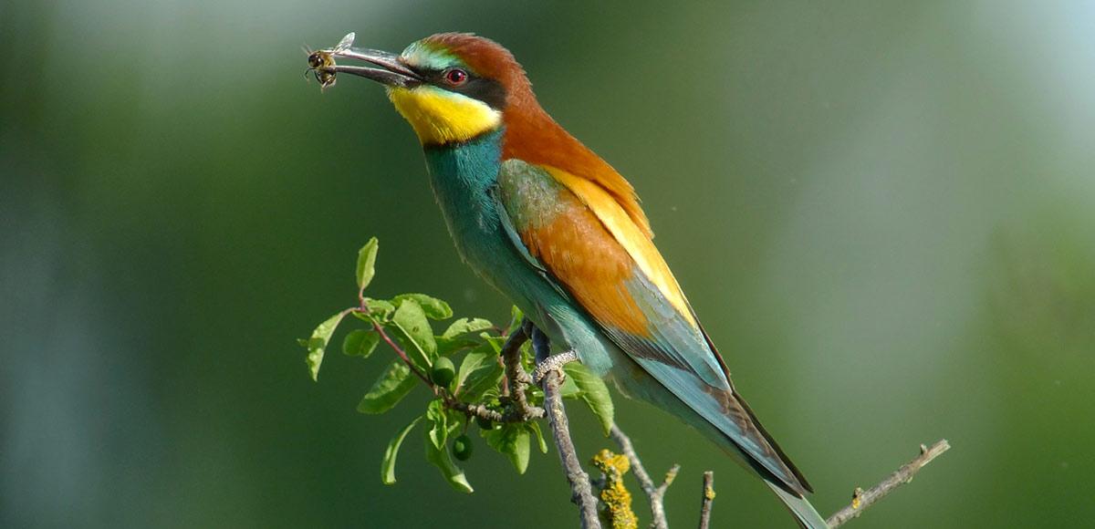 Carriers et associations de protection de la nature s'associent pour préserver les oiseaux