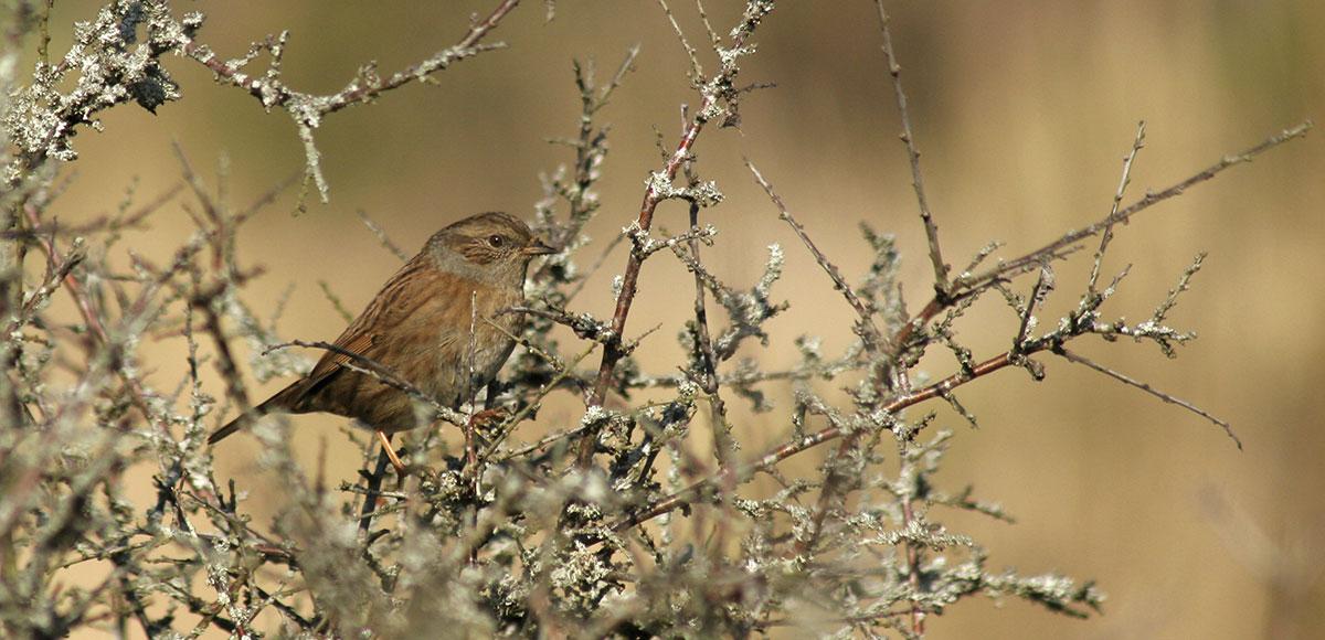Pour les oiseaux, rien ne vaut la taille de mars !